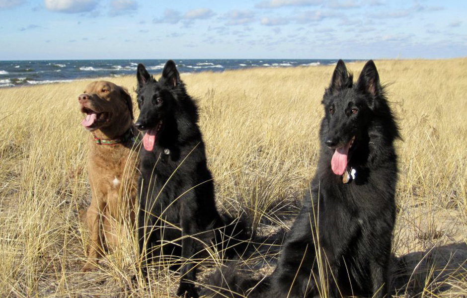 dog-training St.-Cloud-Brainerd-MN-Private-Lessons