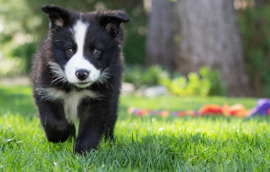 dog-training St.-Cloud-Brainerd-MN-puppy-training